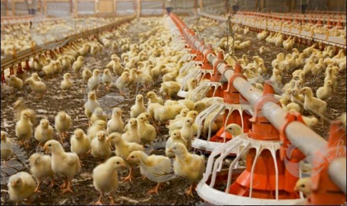 قیمت دانخوری و آبخوری مرغداری