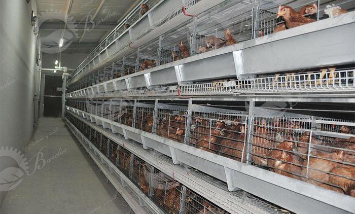 قفس پرورش مرغ گوشتی